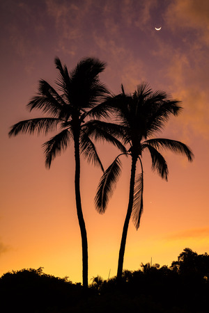 Two Palms Sunrise from Secret beach on the tropical island of Maui, Hawaii. Silhouette of two palm trees, a colorful sky and the moon 版權商用圖片 - 106364541