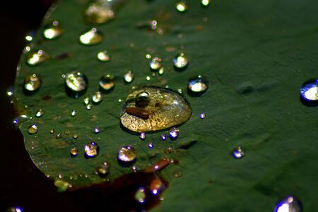 Water Drop on Lotus leaf. Stock Photo - 12028724
