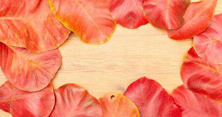 Autumn leaf on wooden background. Standard-Bild - 133598562