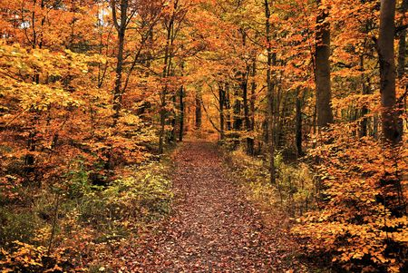 Herfst in forest Stockfoto