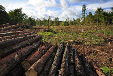 wood log: Destroyed forest