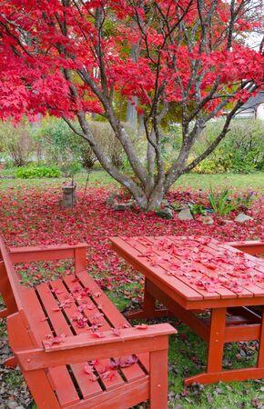 Late autumn in home garden