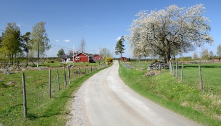 Country road to the Swedish village  photo