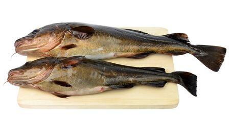 Two fresh cods on a wood board  Stock Photo
