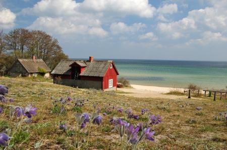 Spring zee landschap