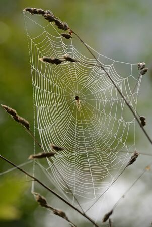 August spider web  photo