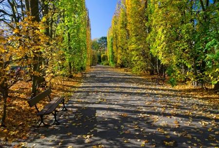 Polish autumn park photo
