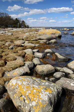 Beautiful Swedish sea coast Stock Photo - 17231976