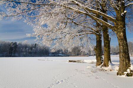 Zweedse meer kust in de winter