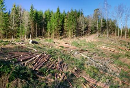 Swedish deforestation Banque d'images