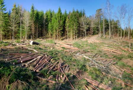 Swedish deforestation Standard-Bild