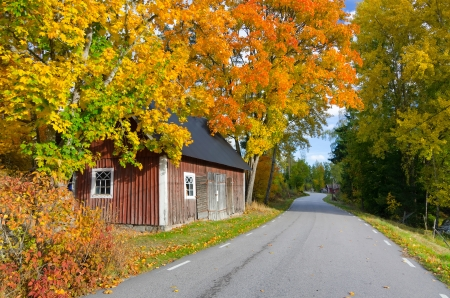 Zweedse herfst contrasten Stockfoto