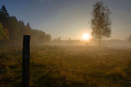Mistige panorama landschap van de Zweedse herfst veld