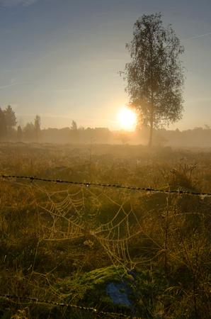 Mystic Swedish morning photo