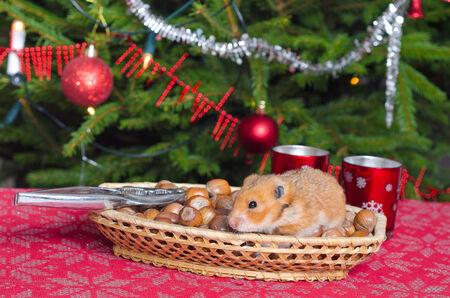 Hamster stodge on Christmas table Stock Photo