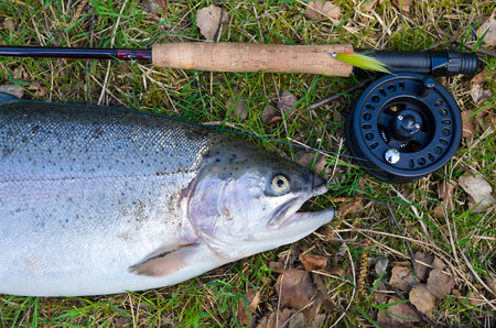 Rainbow trout like a fly fishing trophy photo