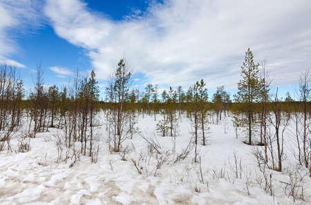 Pure Scandinavian tundra photo
