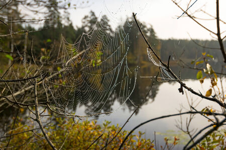 Autumn spider web on the lake coast photo