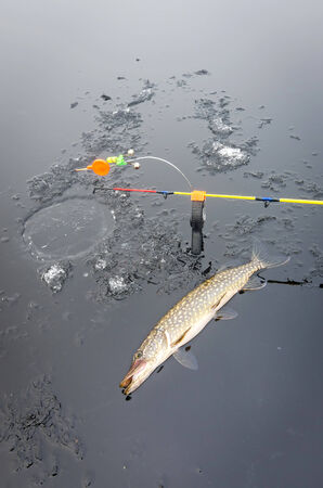 Winter pike fishing from ice photo