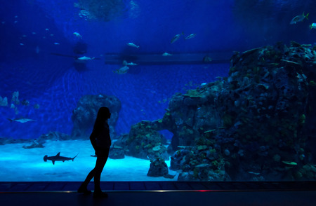 zoo youth: Teenager in front of big aquarium