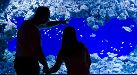 Father and daughter looking for aquarium fishes photo