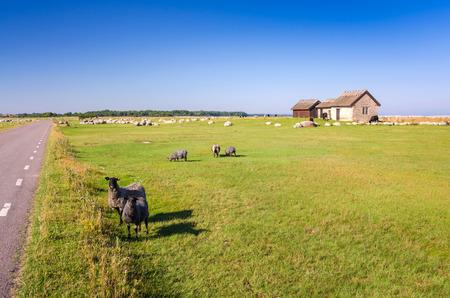 oland: Sheep farm on Oland island Stock Photo
