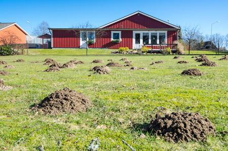 Montículos Mole en campo de hierba sueco Foto de archivo - 37704047