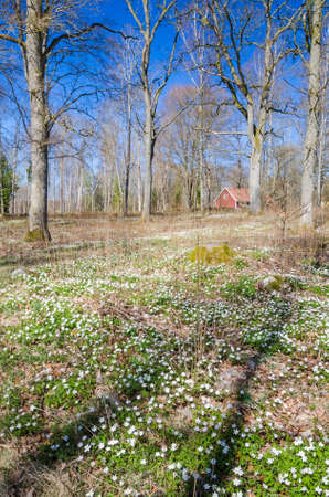 swedish: Spring in Swedish park forest