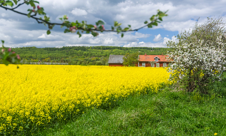 Natural Swedish country frame in spring blooming season photo
