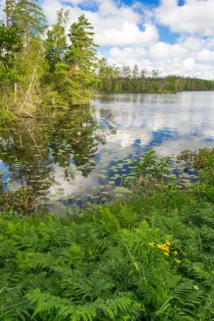 fauna: Fauna lago Verano en Suecia Foto de archivo