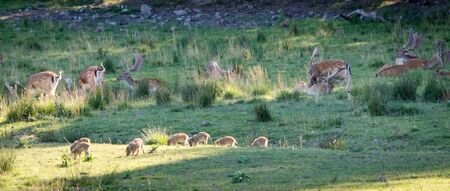 sweden resting: Different wild animals relaxing on shadow grass field