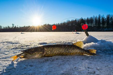 pike: Swedish pike fishing from ice Stock Photo