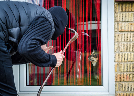 delinquency: Thief against the dog Stock Photo
