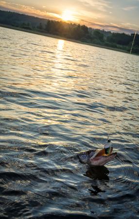 pike: Sunrise pike fishing