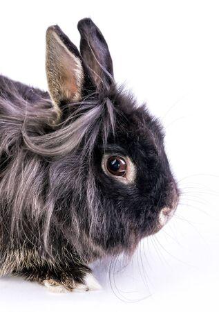 Portrait of dwarf rabbit Stock Photo
