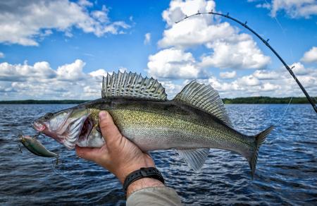 Trolling fishing for walleye