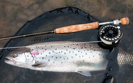 Sea trout - fly fishing concept