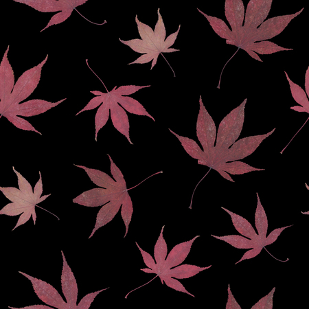 bloodgood: Autumn photographic seamless pattern. Acer palmatum Bloodgood. Seamless pattern. Autumn pattern. Autumn photographic pattern. Autumn leaves, seamless pattern. Autumn leaves, seamless photo pattern