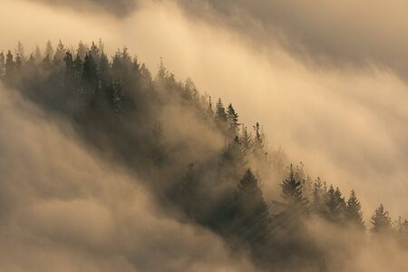 Trees surrounded by fog in morning sun, Slovakia