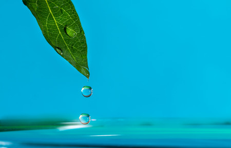 water drop falling from a green leaf on a blue background