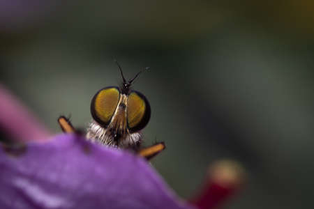 Close up of an insect eyes standing on a purple flower.