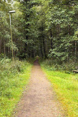 straight path: Straight Path