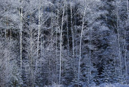 Cold Forrest Stock Photo