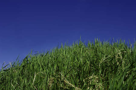 Green grass and sky for background. A nice clear summerday