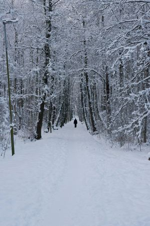 A long path in the woods, trees on both sides and lots of snow, a cold winter day.