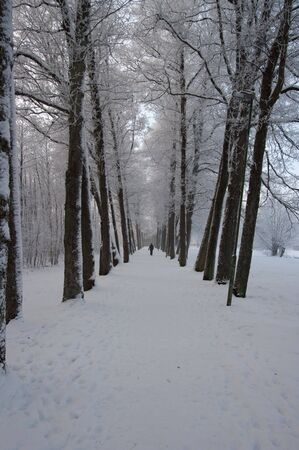 A long avenue with trees covered in snow a cold winter day. One person walking in the distant. Stock Photo