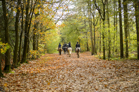 Rucphen, The Netherlands - October 29, 2013: Group of horse riders in the forest in autumn Редакционное