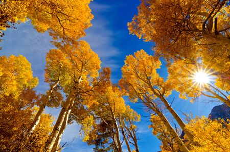 Aspen grove, Inyo National Forest, Eastern Sierra, California Stock Photo - 17384343