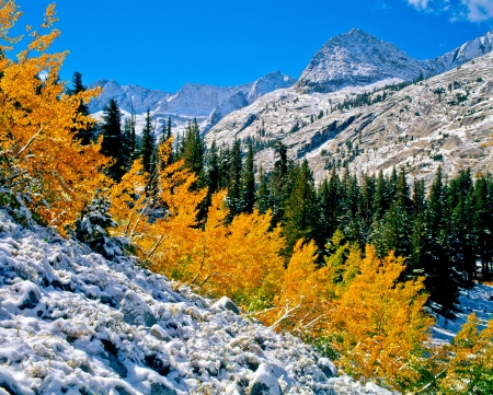Aspens dusted by early fall snow below the Kings-Kern Divide on East Creek in Kings Canyon National Park, California.