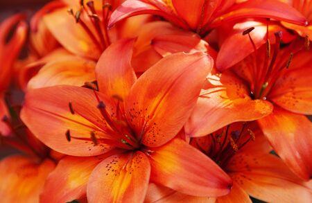 lots of orange-red flowers in a bundle